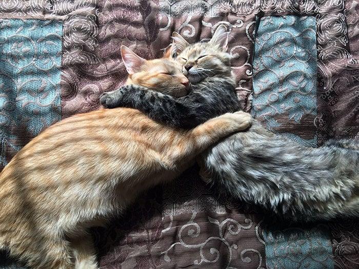 Осиновени котенца показват силните чувства, които изпитват едно към друго