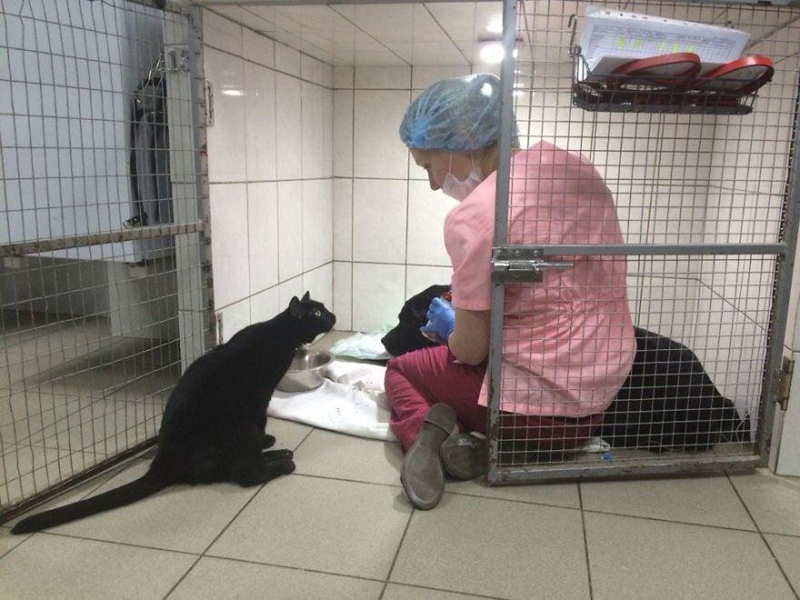 Котка, която не може да ходи, помага на болни животни