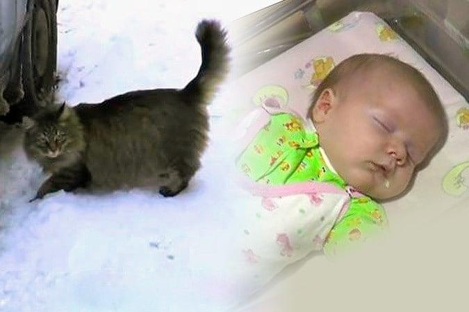 Котка спасява живота на изхвърлено бебе, като го топли с тялото си