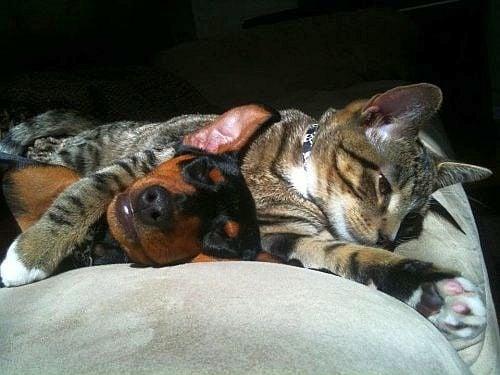 Котка започва да се грижи по удивителен начин за куче, когато то се разболява тежко