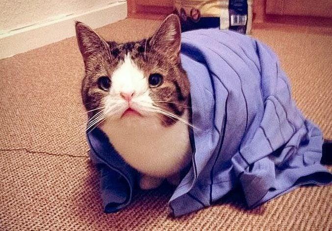 Котката Монти, която няма носова кост, намира нови любящи стопани