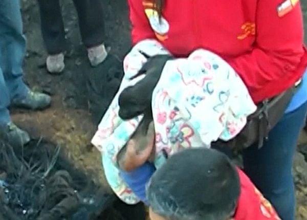 Куче изкопа дупка, за да спаси 9-те си малки от огромен пожар