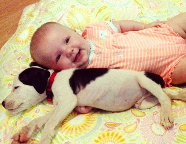 Кученце питбул и бебе са най - сладките приятели, които сте виждали някога