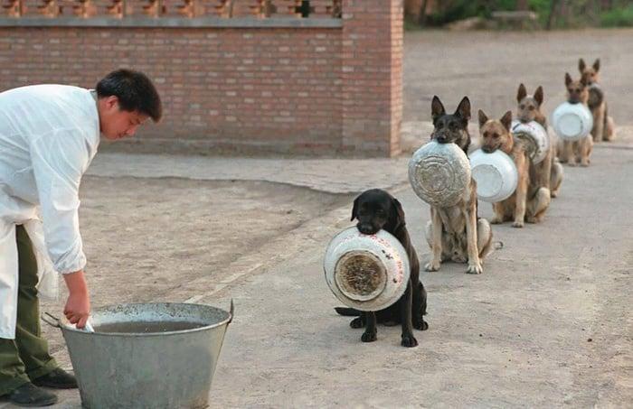 Уникално: Полицейски кучета се нареждат на опашка за храна в Китай