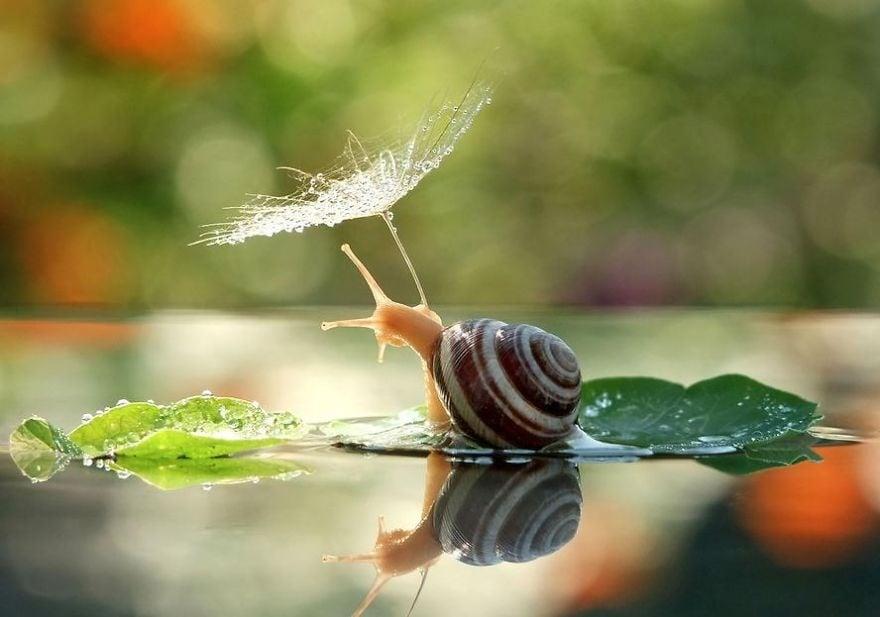 Магически красиви снимки на природните чадъри, които използват дивите животни