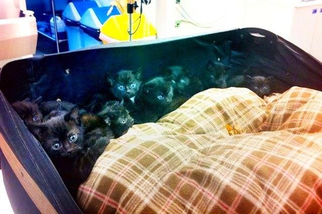 Жена спаси 15 малки котенца изоставени в куфар