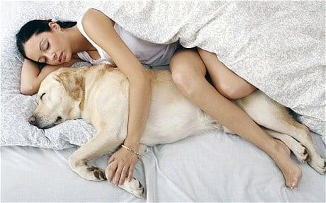 Могат ли кучето/котката да спят в леглото ви?