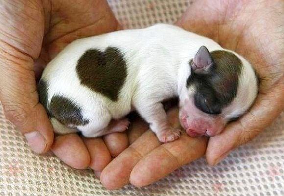 Най - сладките бебенца животни по света (първа част)