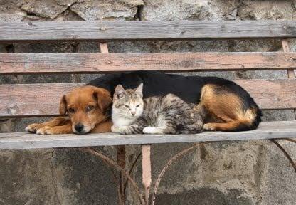 Във Варна продължават случаите на натровени животни