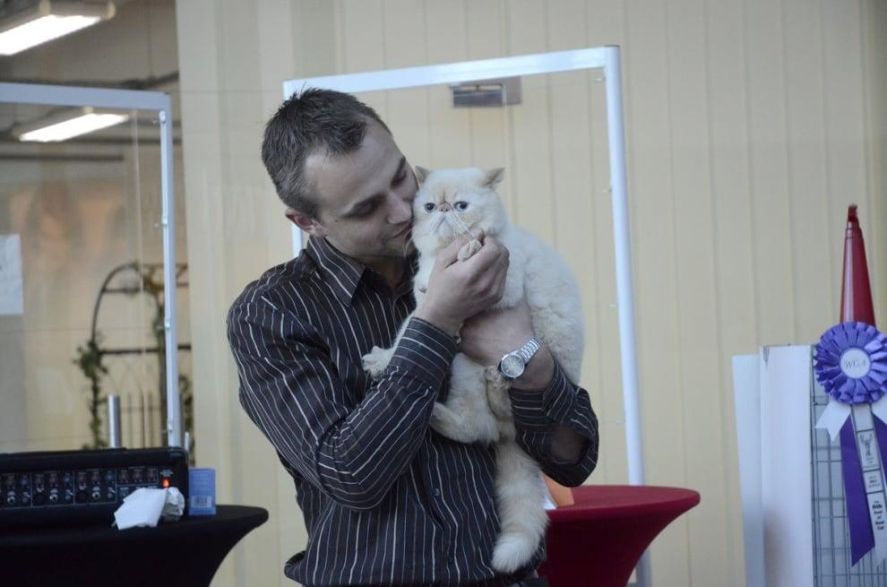 Победители в конкурса за редки породи котки в Paradise Center
