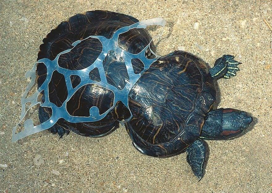 Потресаващи снимки, които показват отношението на човека към природата и животните