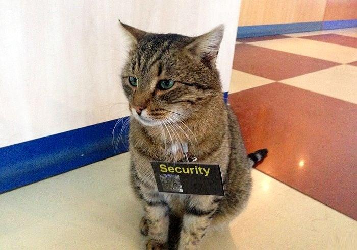 Прекрасни котки, мечтаещи да работят в магазин