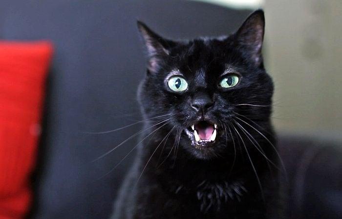 Разберете какво се опитва да ви каже вашата котка само по езика на тялото й