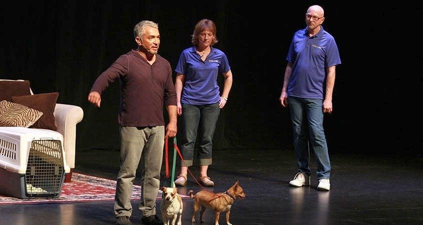 Регистрирайте кучето си сега, за да стане звезда в шоуто на Сизър Милан! Ето как...