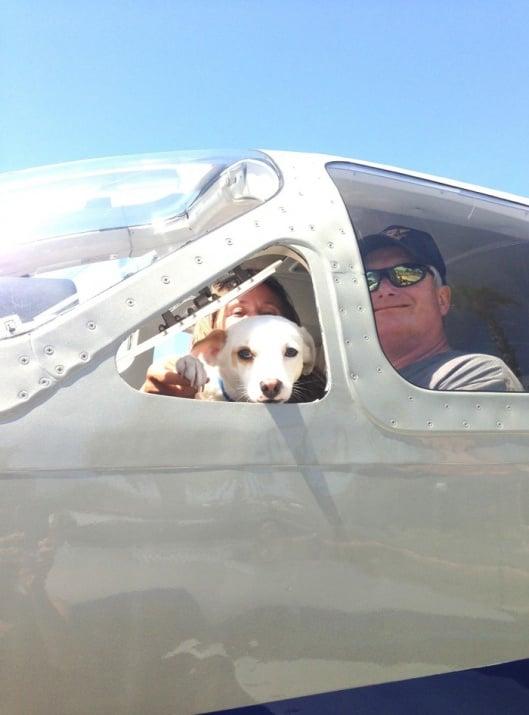 Пилоти доброволци превозват кучета от приюти до новите им домове, за да ги спасят от евтаназия