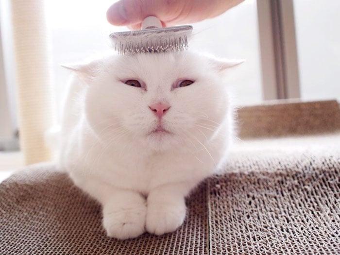 Тази 17-годишна котка е най - очарователната интернет звезда в Япония