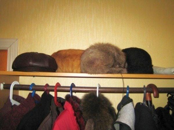 Тест за наблюдателност - намерете котката на снимката!