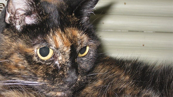 Тифани, най - старата котка в света, навърши 27 години