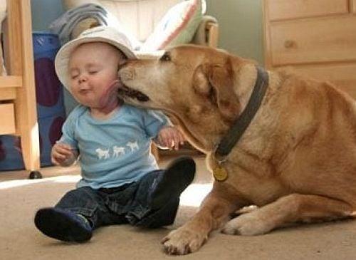 Трогателни снимки с животни, излъчващи доброта