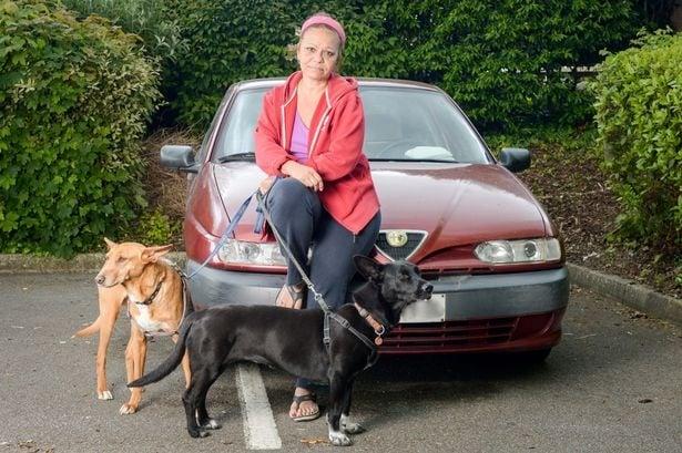 Учителка живее в кола, защото не иска да се откаже от кучетата си