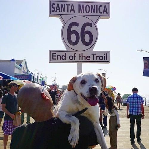 Стопанин се отблагодари на умиращото си куче, за щастливите моменти прекарани заедно, с уникално пътешествие