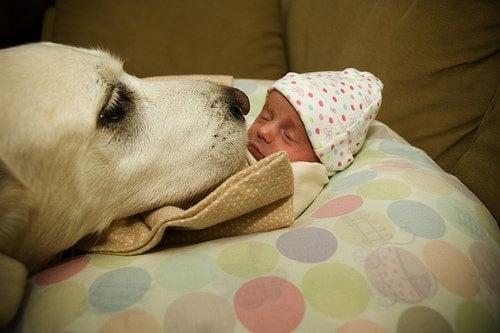Уникални снимки, доказващи, че кучета и бебета могат да живеят заедно (първа част)