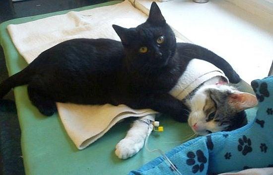 В полски приют за животни се появи котка медицинска сестра