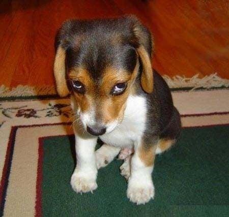 Снимки, доказващи, че кучетата изпитват чувство на вина