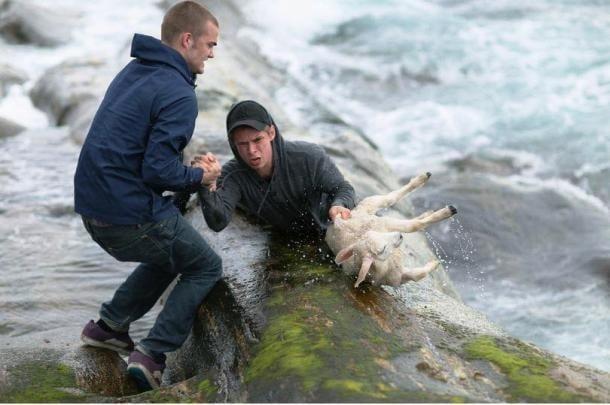 Запомнящи се спасявания на животни, които връщат вярата ни в човечеството