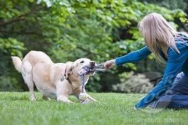 Защо кучетата обичат да дърпат играчките?
