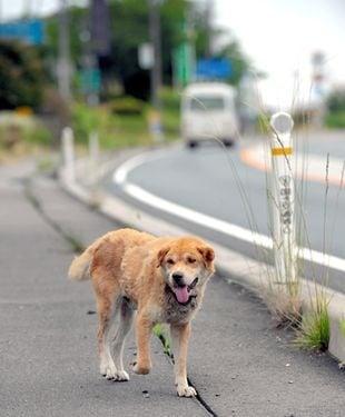 Защо кучетата бягат от дома?