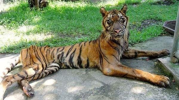 Зоологическа градина в Индонезия е наречена