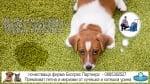 Премахване на петна и миризми от урина на кучета и котки от дивани, матраци и килими