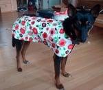 Бъдете готови за дъжда, като направите саморъчен дъждобран за кучета