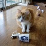 Котка чупи предмети