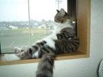 Котка до прозорец