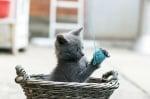 Котка играе с конци