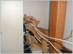 Котка яде кабели