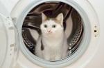 Котка в пералня