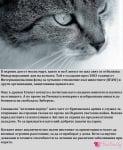 1 март и 8 август - Световен ден на котката