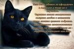 27 Октомври - Национален ден на Черната котка