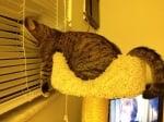 Опаност щори котка