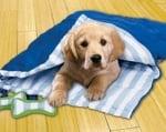 Спане при кучетата