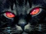 Суеверия с котки