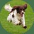 Профилактика на кучето за паразити